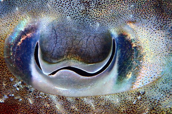 cuttlefish-eye-548901005677
