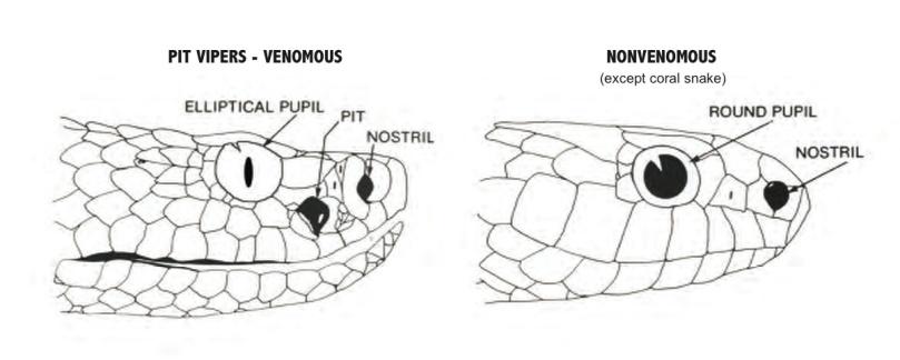 venomous_vs_non-venomous